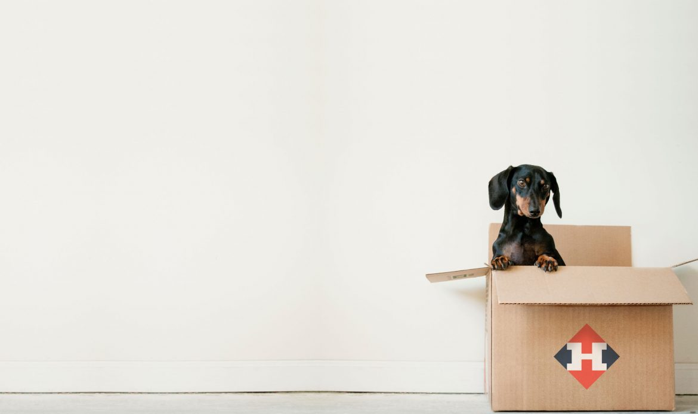 hond in verhuisdoos w. van haarlem verhuisservice